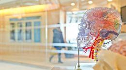 livre-danatomie-physiologie